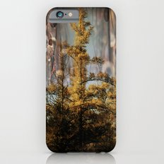 Swampy Forest Of Dreams iPhone 6s Slim Case