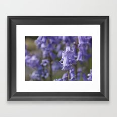 The Bluebell Patch Framed Art Print