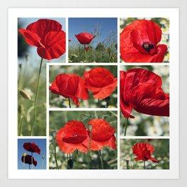 Poppies Collage Art Print