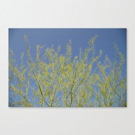 Seas of Trees Canvas Print