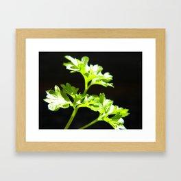 Curled parsley Framed Art Print