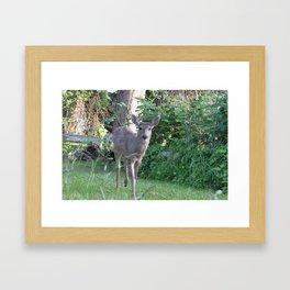Curious Deer Framed Art Print