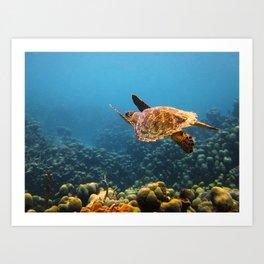 Caribbean Turtle Art Print
