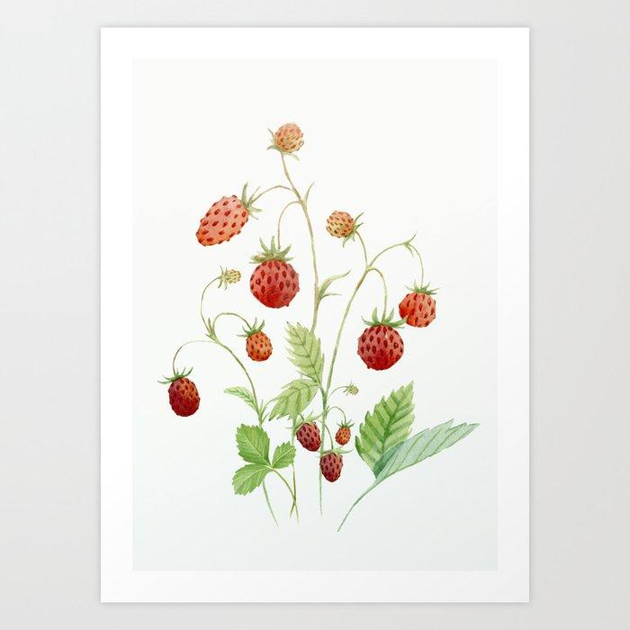 Wild Strawberries Kunstdrucke