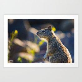 Pensive Squirrel Art Print