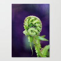 fern Canvas Prints featuring Fern by LoRo  Art & Pictures