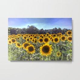 Sunflower Fields Of Summer Metal Print