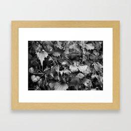 Leaves Framed Art Print