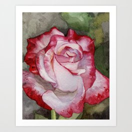 Carmine Rose Art Print