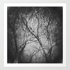 Trees in the dark Art Print