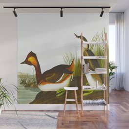 Eared Grebe John James Audubon Scientific Illustration Birds Of America Drawings Wall Mural