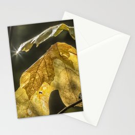 Touched by Light Stationery Cards