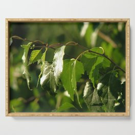 Green birch leaves Serving Tray