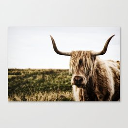 Highland Cow - color Canvas Print