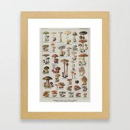 Vintage French Mushroom Identification Chart Framed Art Print