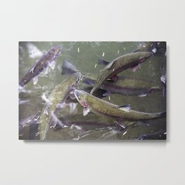 Growing up Trout Metal Print