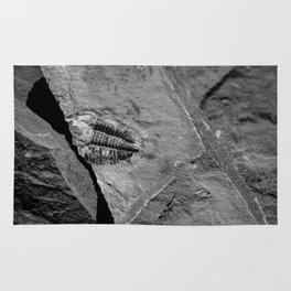 Utah - Trilobite Fossil Crack Rug