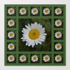 Daisy Collage Canvas Print