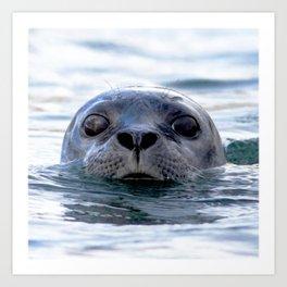 Watercolor Harbor Seal Art Print
