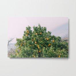 Oranges for Days Metal Print