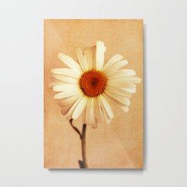 Caramel Daisy Metal Print