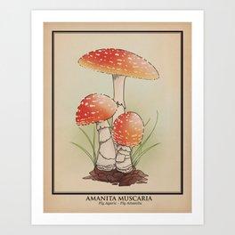 Amanita Muscaria  - Fly Agaric Art Print