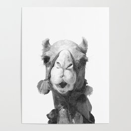 Black and White Camel Portrait Poster