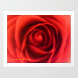 Close Up Rose Art Print