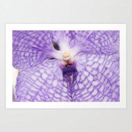 Purple Phalaenopsis Orchid Detail Art Print