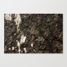 Living on Concrete Canvas Print