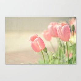 Tulip Love Canvas Print