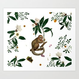 Monkey World: Amber-Ella - White Art Print
