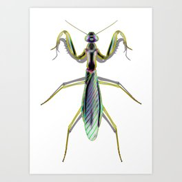 Super Cool Prayer Insect Art Print