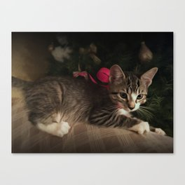 Molly in oils Canvas Print