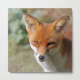 Fox_20171201_by_JAMFoto Metal Print