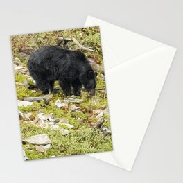Busy Black Bear - Glacier NP Stationery Cards