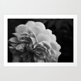 Wildeve Rose No. 2 - Black & White Art Print