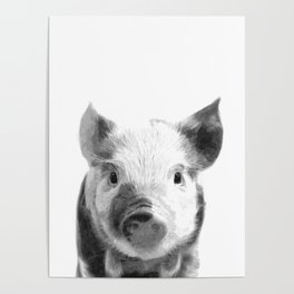 Black and white pig portrait Poster