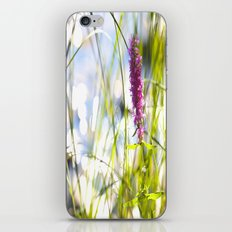 Pink Flower At the Beach iPhone & iPod Skin