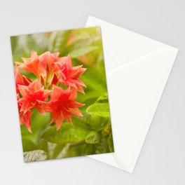 Rhododendron called Azalea red flowers Stationery Cards