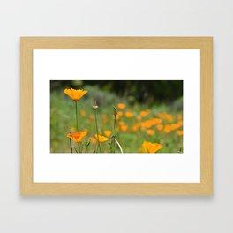 California Poppy Field Framed Art Print