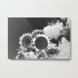 Sunflowers-160830-453-X2 Metal Print