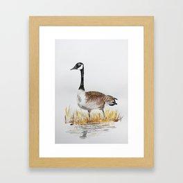 Bernache du Canada (Canada Goose) Framed Art Print