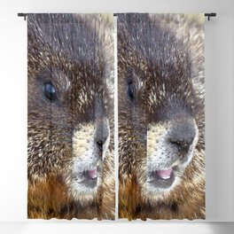 Watercolor Marmot 05, Rocky Mountain National Park, Just Grin & Bear It! Blackout Curtain