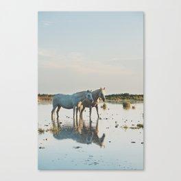 Camargue Horses #20 photograph Canvas Print