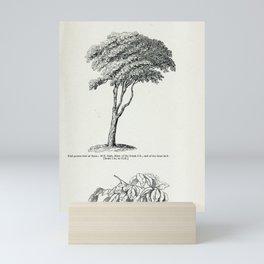 Tree Sassafras tree 22 Mini Art Print
