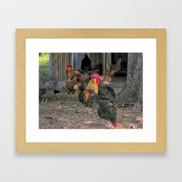 Rooster in the hen house Framed Art Print