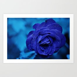 Blue Rose With Rain Drops Art Print