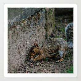 City Squirrel Art Print