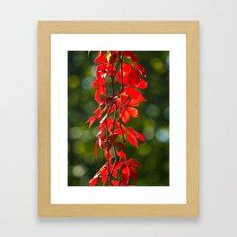 Colours of Autumn Framed Art Print